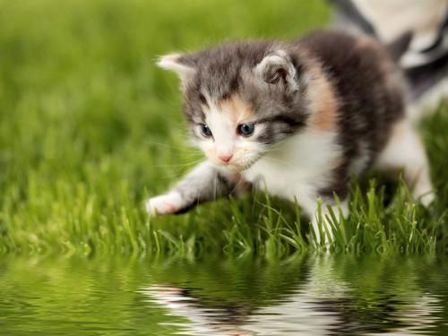 水に興味を示す猫