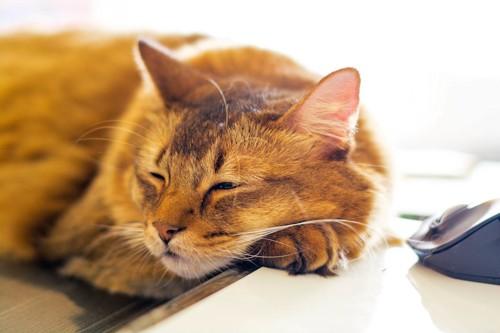 陽だまりの中で眠る猫