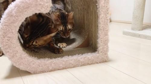 爪とぎの中で遊ぶ猫