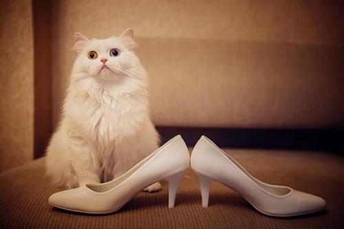 白い猫と白いハイヒール