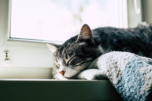窓のそばで眠っている猫