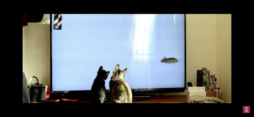 テレビを見つめる猫たち