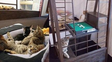猫カフェ 二庵の店内全景