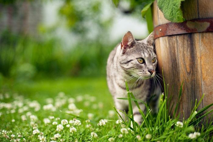 物陰から様子を伺う猫