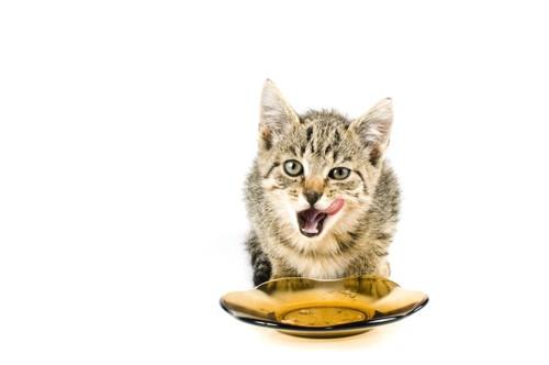 口周りを舐める子猫と皿