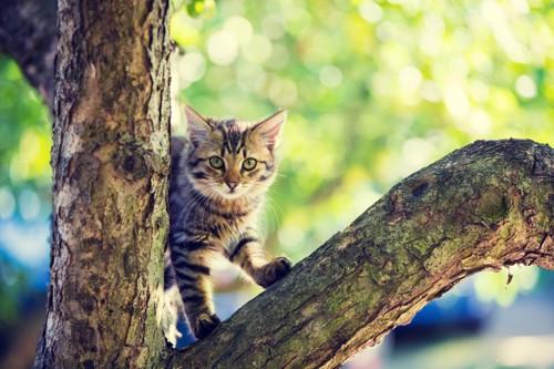 木に登っている猫