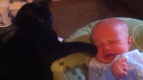ちょっかいをだす猫