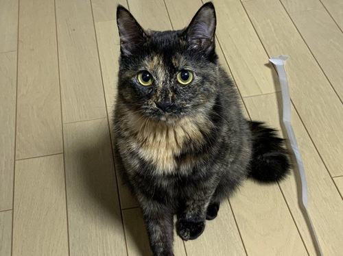 床の上でこちらを見上げる猫