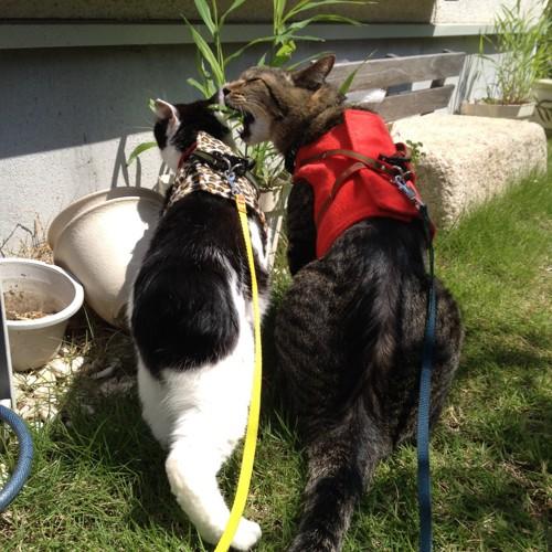 左白黒猫と右赤いベストのキジトラ猫