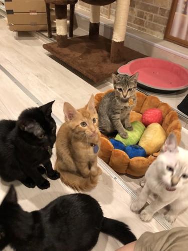 フロア猫たち