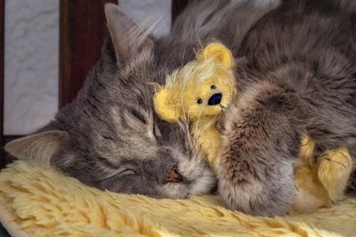 クマの人形を抱えて寝る猫