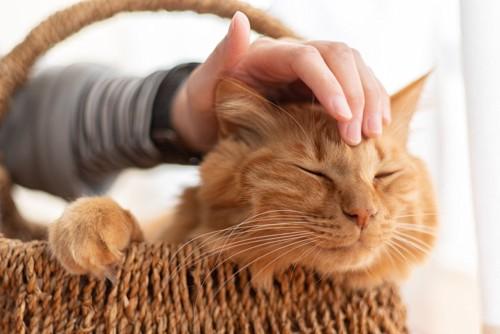 撫でてもらう猫