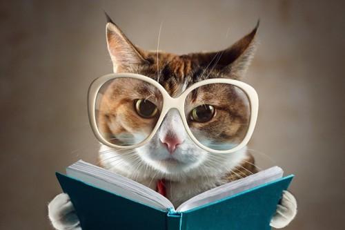 白眼鏡で本を読むキジトラ白