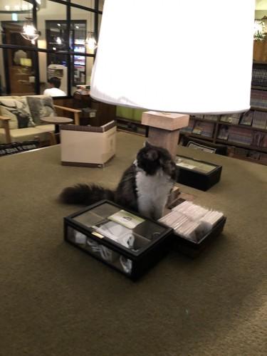 部屋の真ん中で座る猫