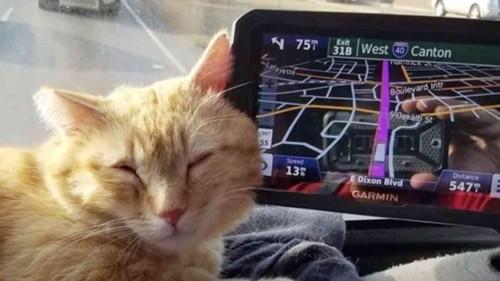 車のナビに寄りかかる猫