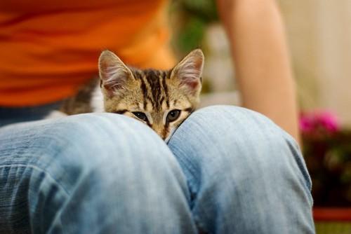 膝の上でいじける猫