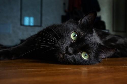 床に寝そべる黒猫