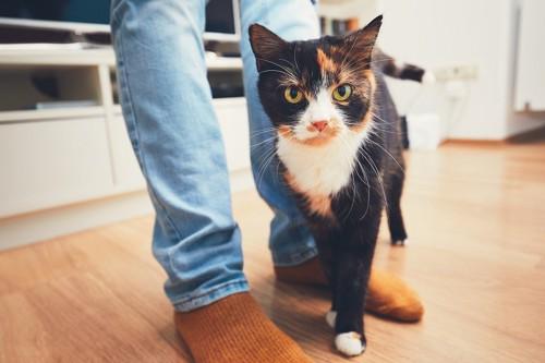 人間の足元でこちらを見つめる猫