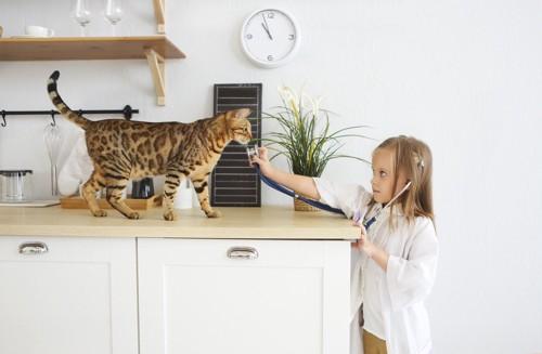 女の子とベンガル猫
