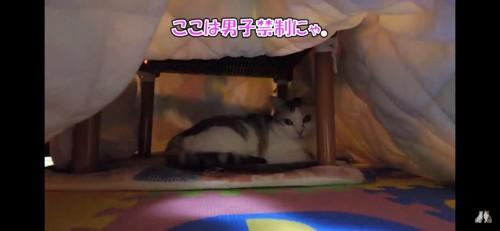 コタツに入る猫