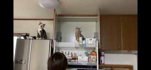 レーザーポインターを見つめる猫