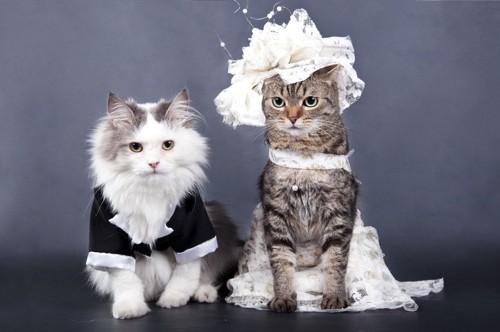 おめかしした猫達