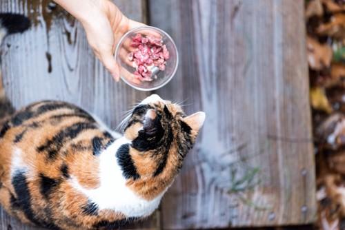 三毛猫と餌を与える手