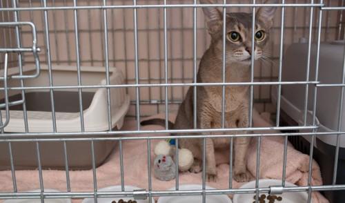 ケージの中の猫とトイレと食べ物