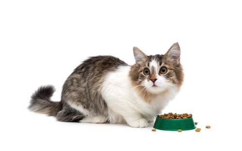 ごはんが入った容器と見上げる猫