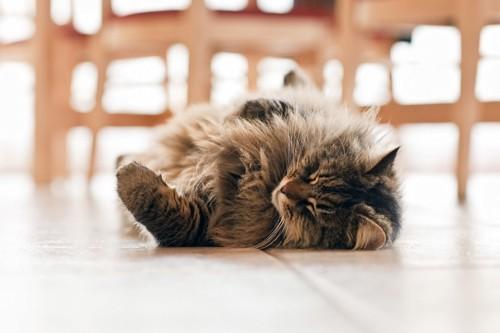 床で寝る長毛の猫