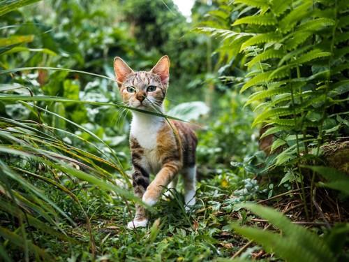 草むらの中を歩いている猫