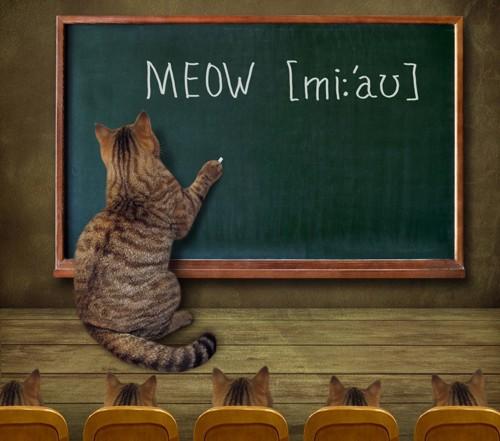 黒板に文字を書く猫