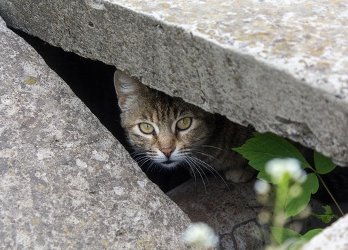 溝に隠れている猫