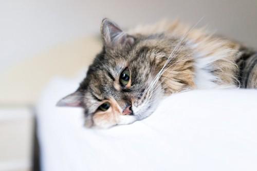 落ち込んじゃった猫