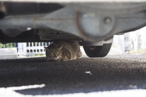 車の下に隠れる猫