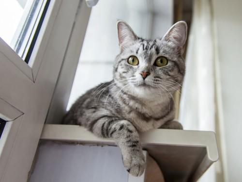 階段に座っている猫