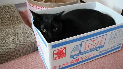 箱に入る黒猫