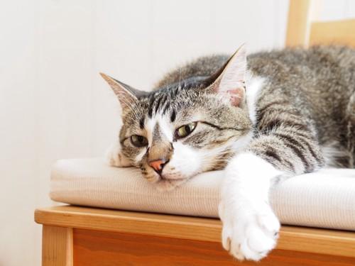 ぐったりして寝そべる猫