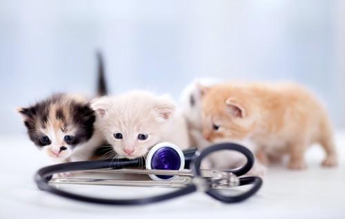 聴診器と3匹の子猫