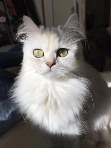 日を浴びる猫