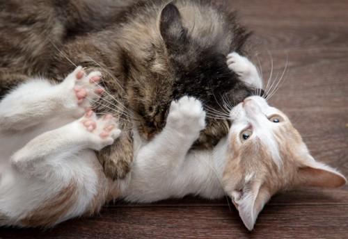 取っ組み合いの喧嘩をする2匹の猫