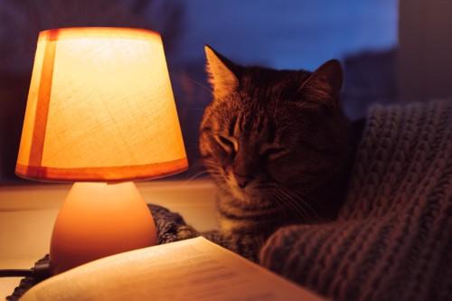 ライトと本とキジトラ