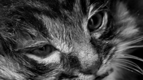 レスキュー後の子猫の顔アップ