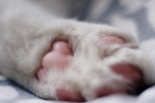 ピンク色の猫の肉球のアップ