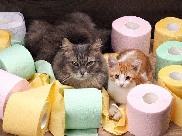 トイレットペーパーに囲まれた二匹の猫