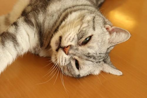我慢する猫