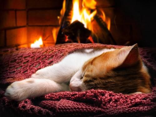 火のそばで寝ている猫