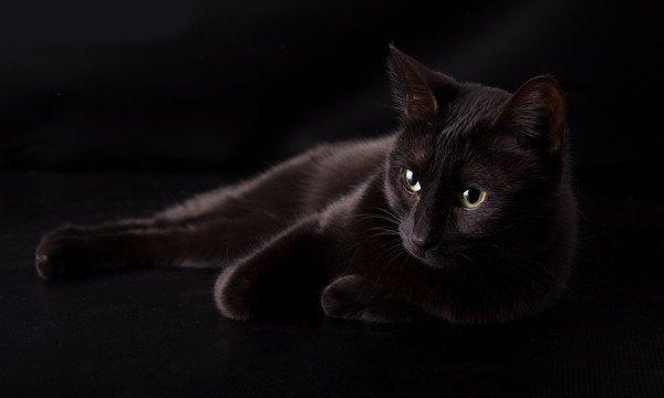 暗い場所にいる黒猫