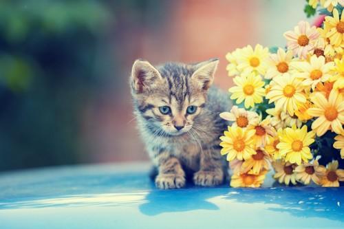 花の影に隠れる子猫