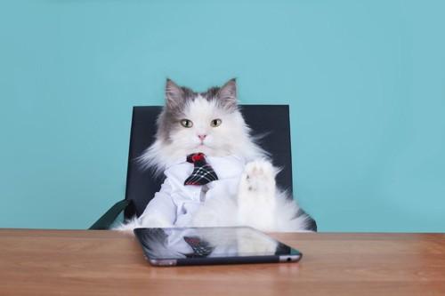 椅子に座るボス猫